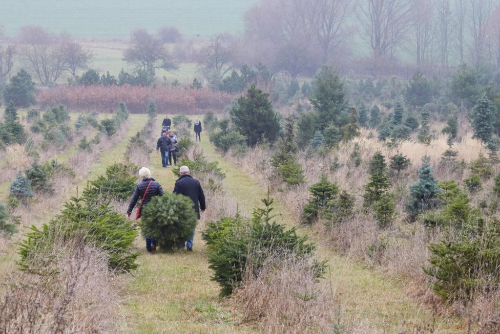 Vánoční řezání stromků - ALD Automotive